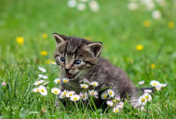Drontal pro kočky